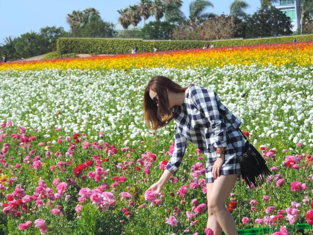 carlsbad flowerfied blooming.JPG