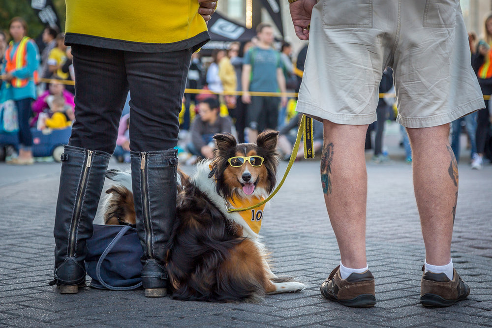 Locals (and their dogs) participating in the annual Homecoming Parade in downtown Iowa City, Oct. 2015
