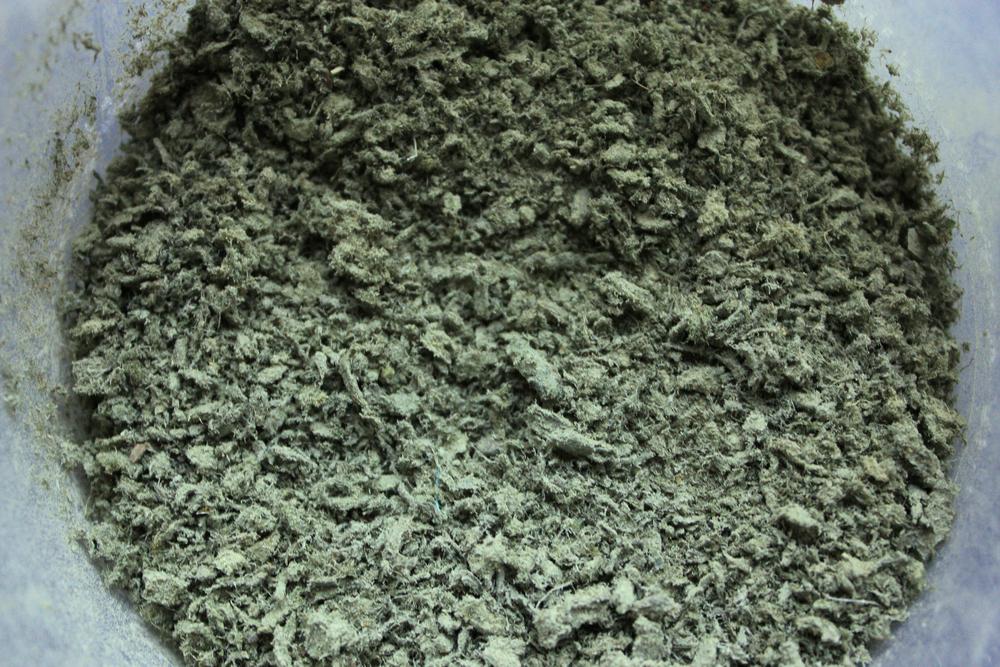 algaepowder