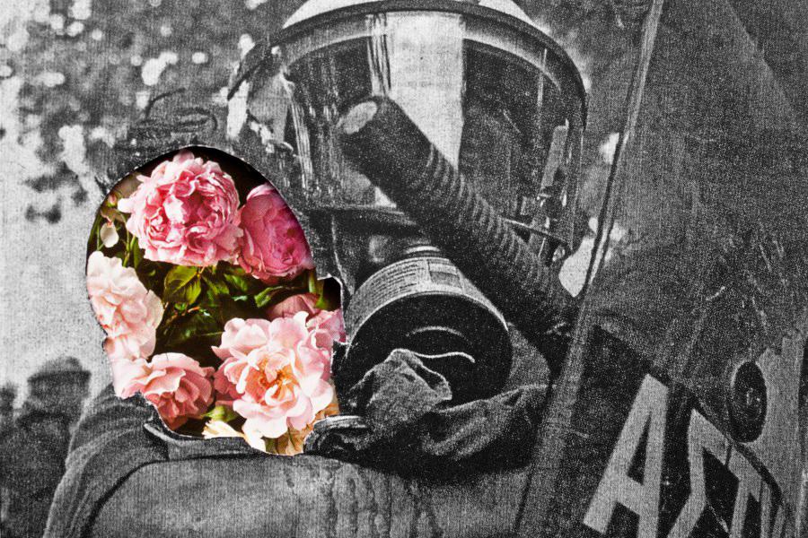Sangran las Rosas