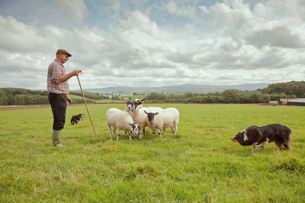 Mark Elliot, champion sheepdog triallist . Country Life Magazine.