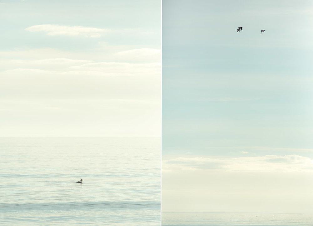 BirdsEmbo.jpg