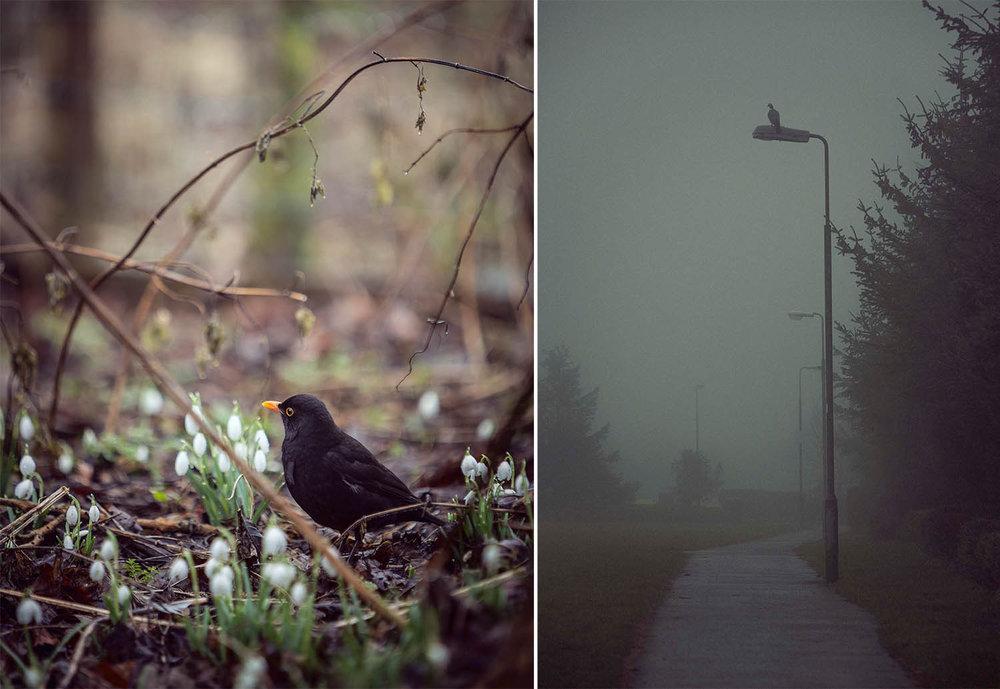 BlackBirdFoggyLamp.jpg