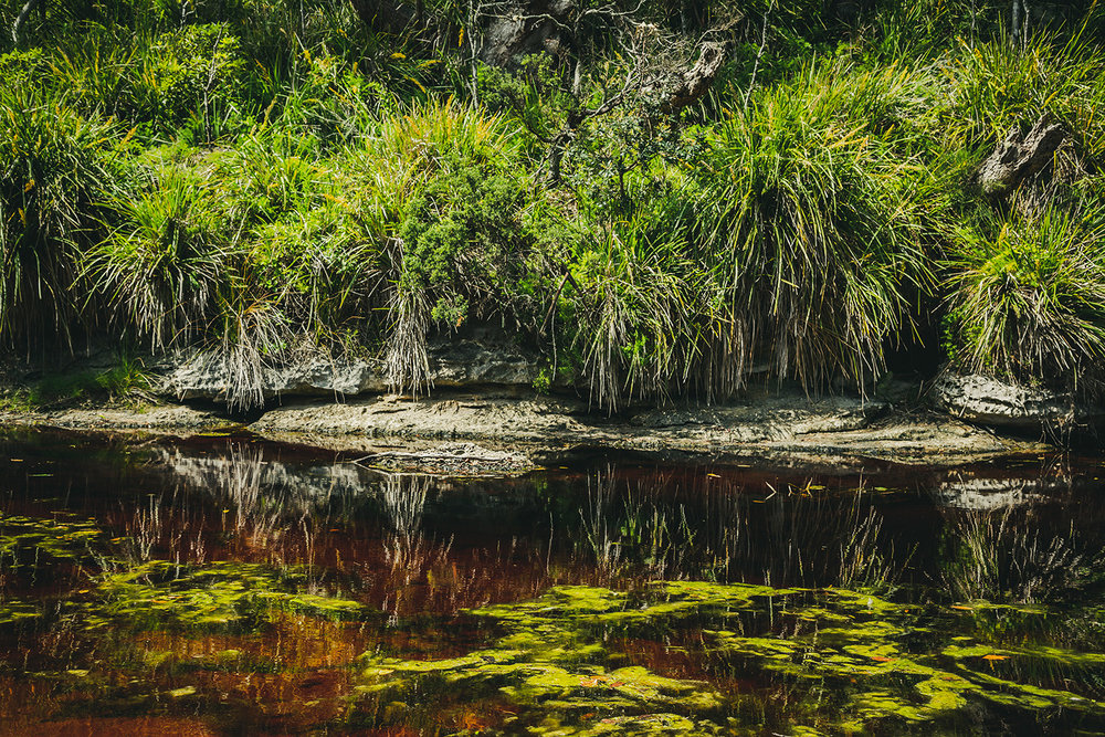 Bush reflections.  Currarong, South Coast, NSW.