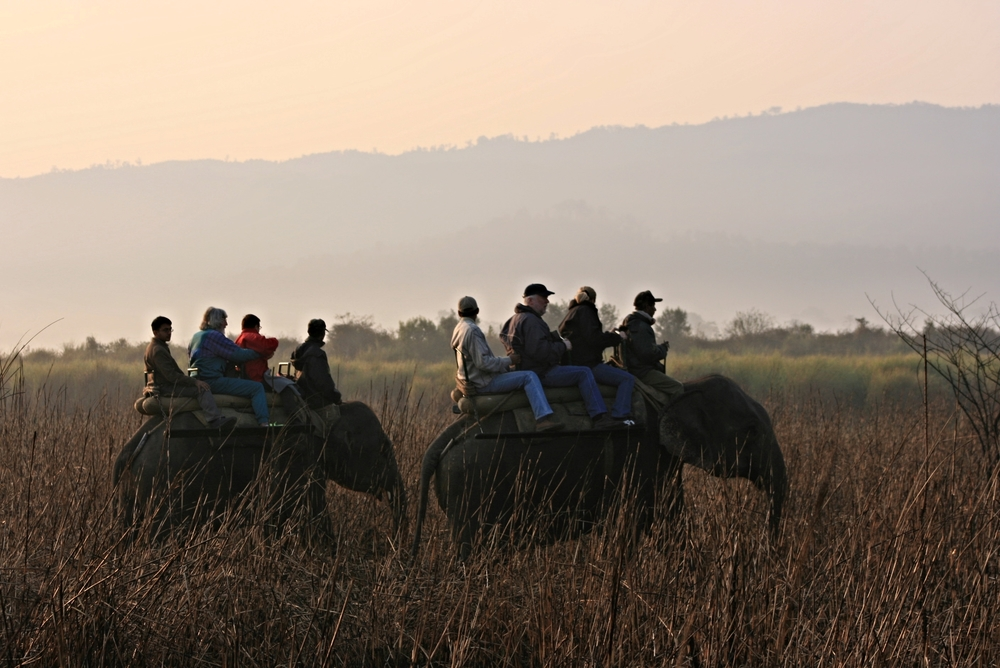 Kaziranga Elephant ride.JPG