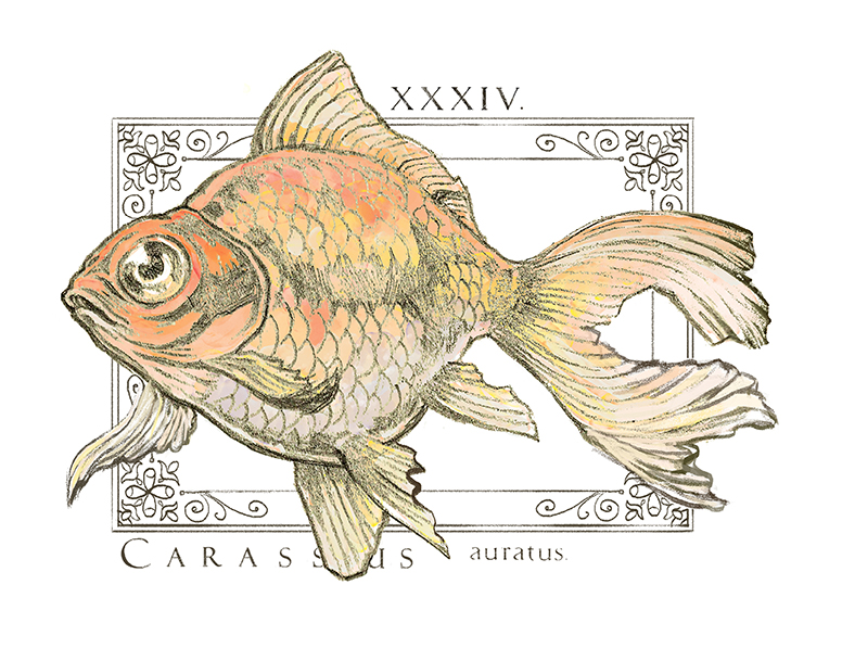 Gold Fish Graphic