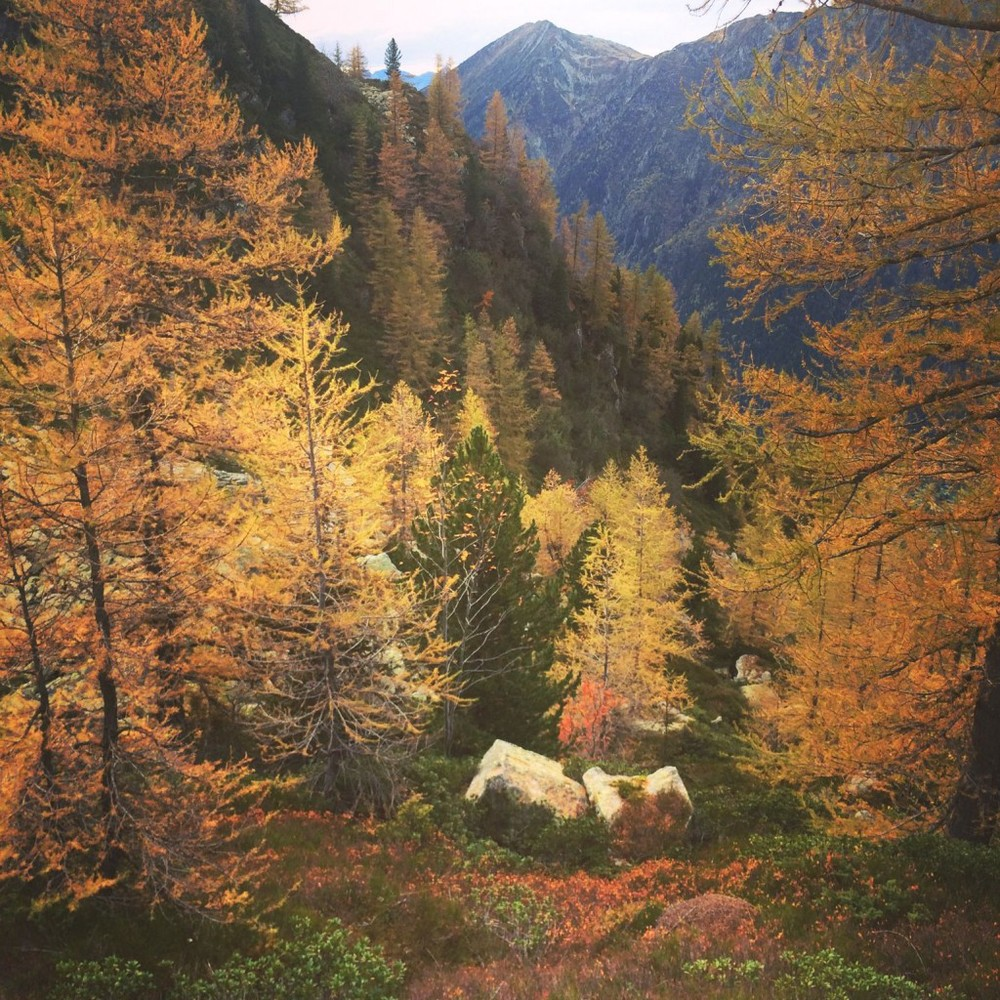 Sophie Radcliffe, Autumn in Chamonix