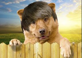Bear hair