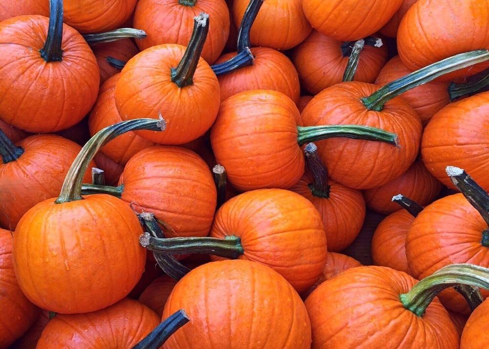 fall-950442_1280.jpg