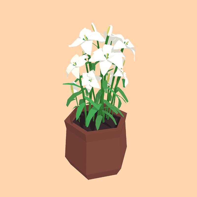 Plant 05