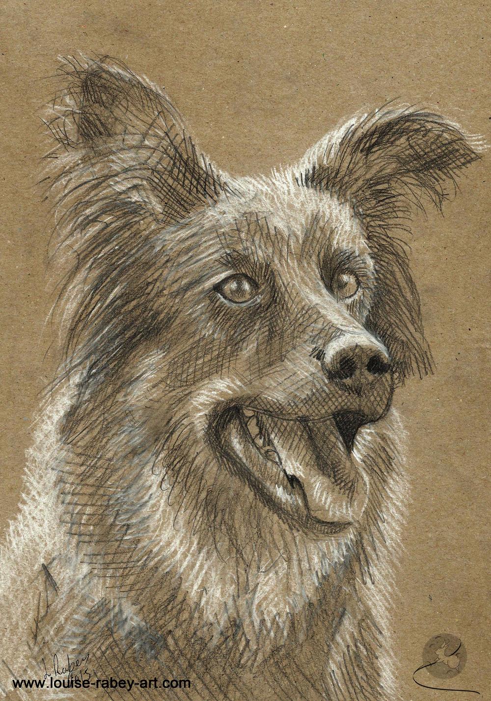 008 Dog sketch portrait.jpg