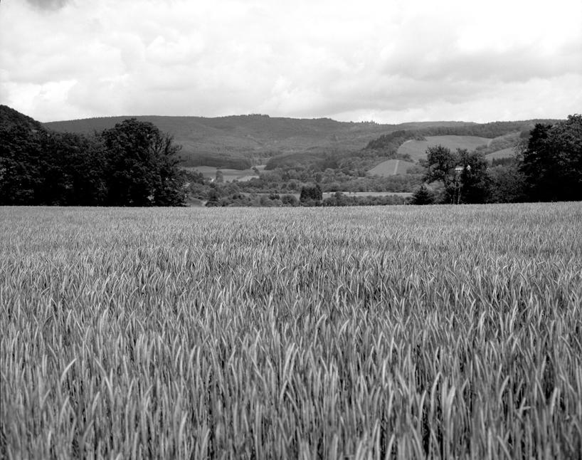 20-05 Field, Wittlich88.jpg