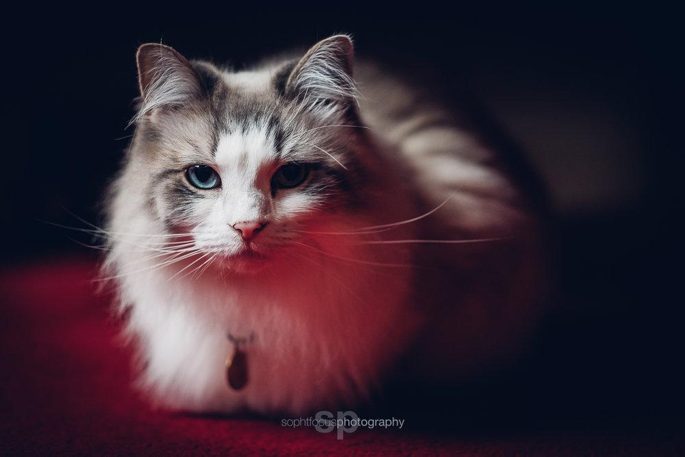 Beautiful Lulu