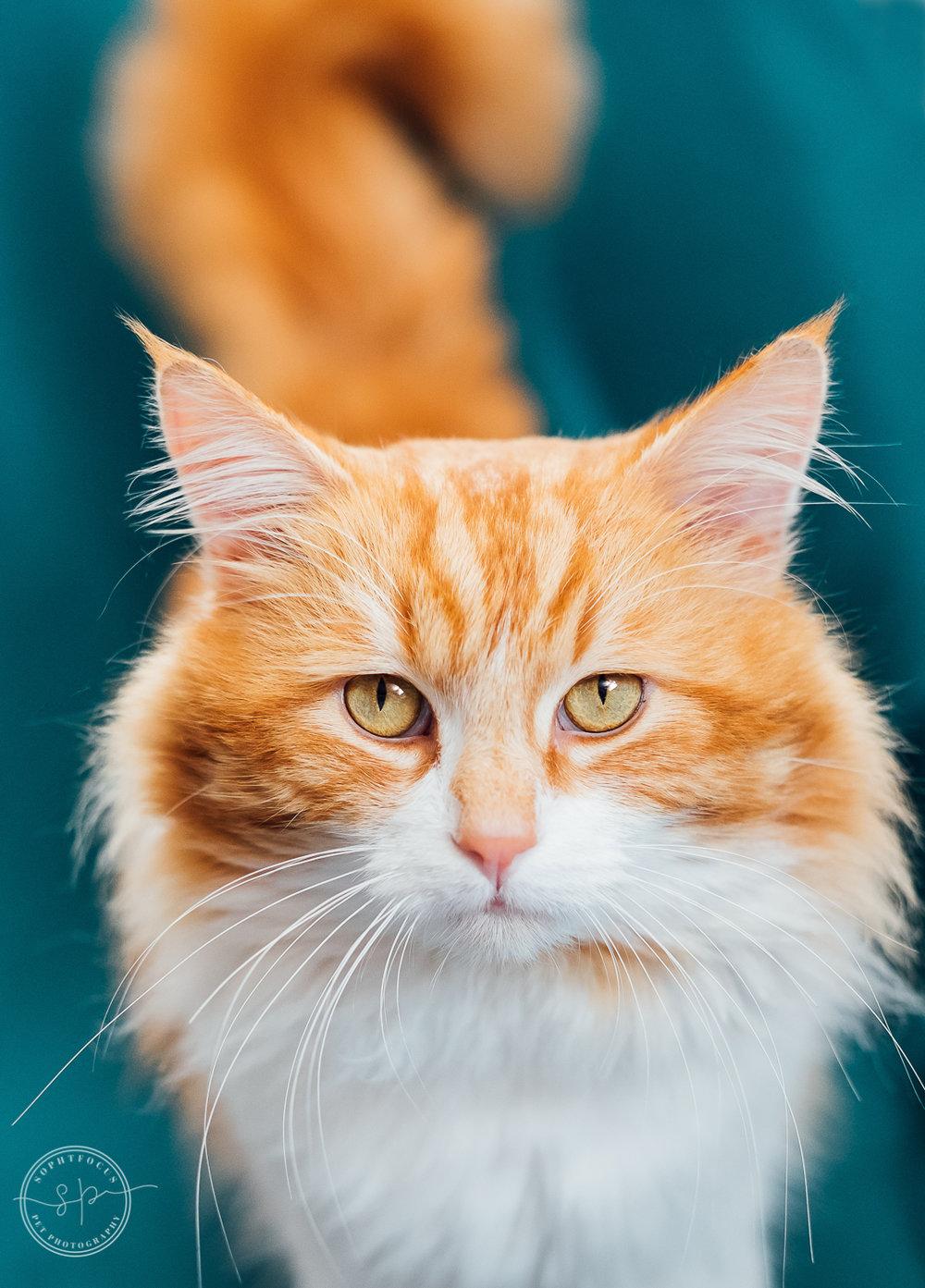 rescue cat 2