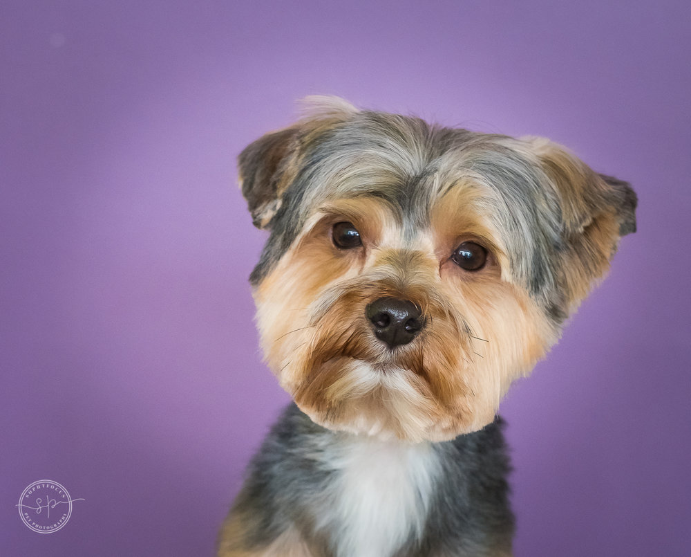 grromed dog