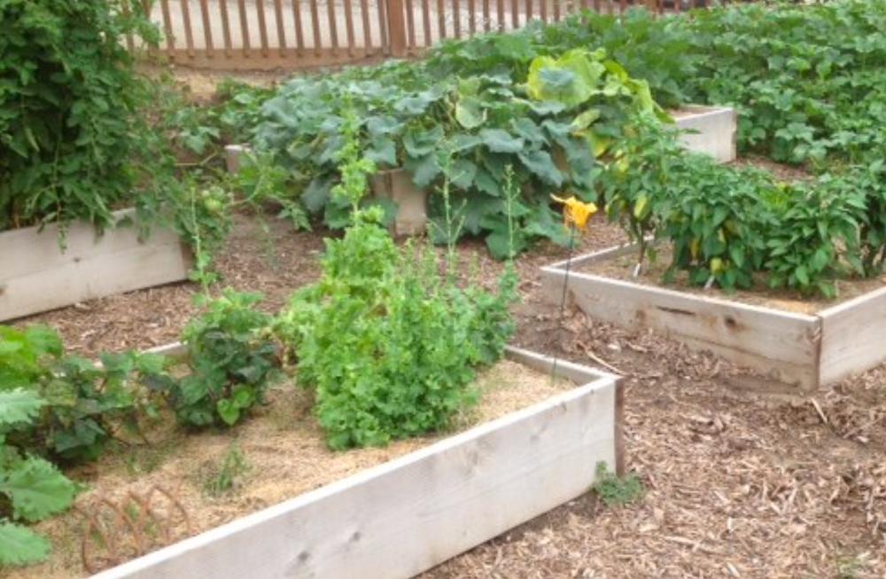 Raised-Garden-Blend