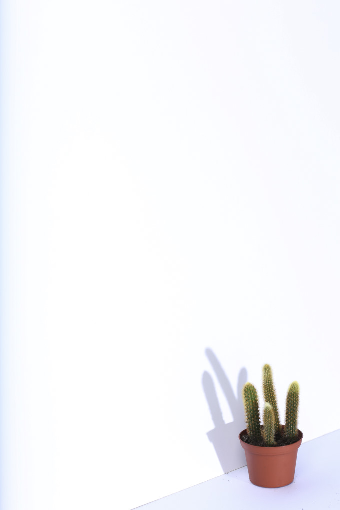 Cactus_H2.jpg