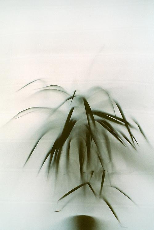 пальма,by mademuaselle