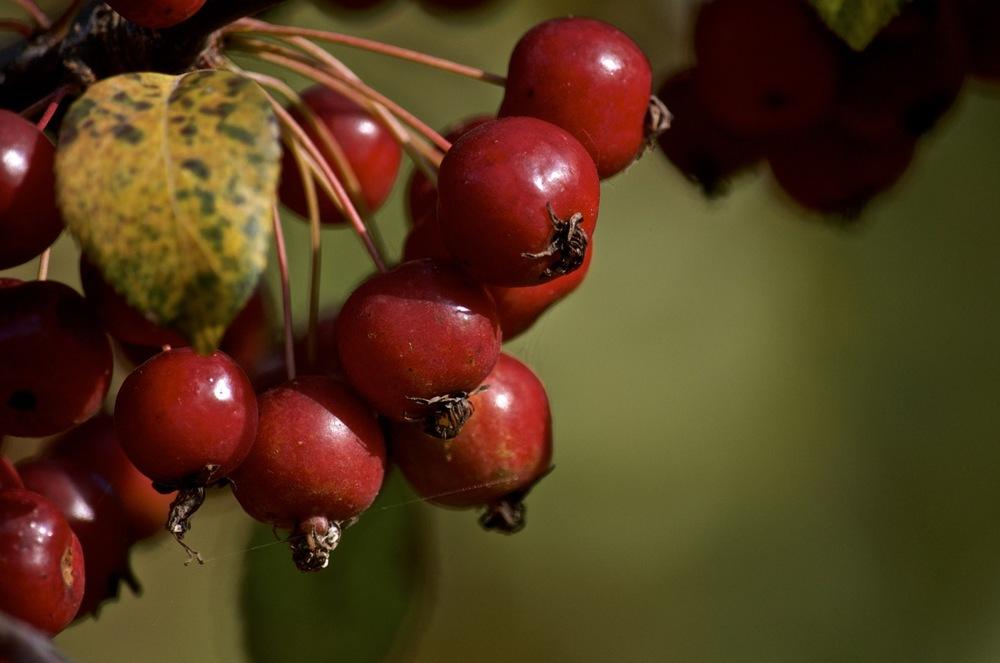 The Fruit of Primehook