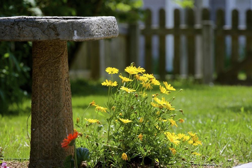 Flowers & the Birdbath