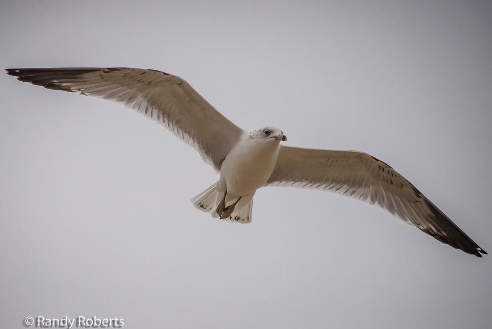 Gliding Along