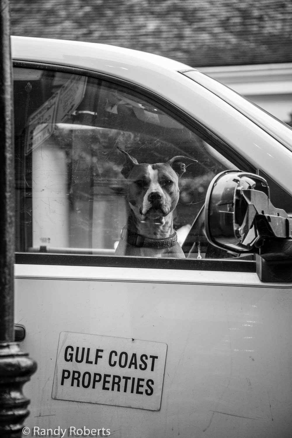 The Dog in the Car