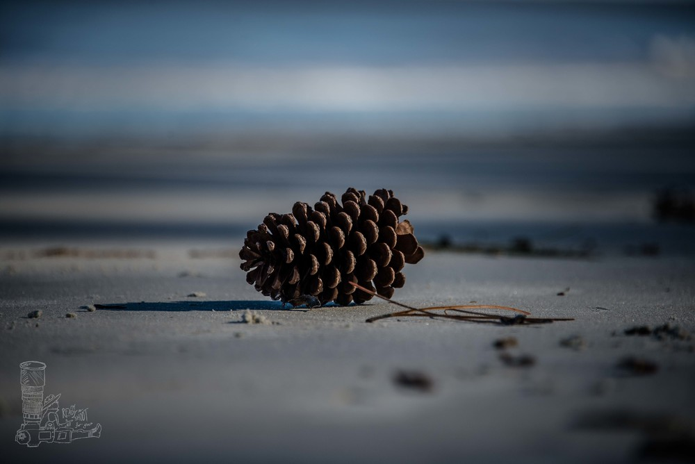 Beach Pinecone