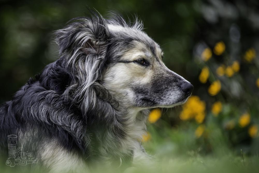 Daisy in the Yard