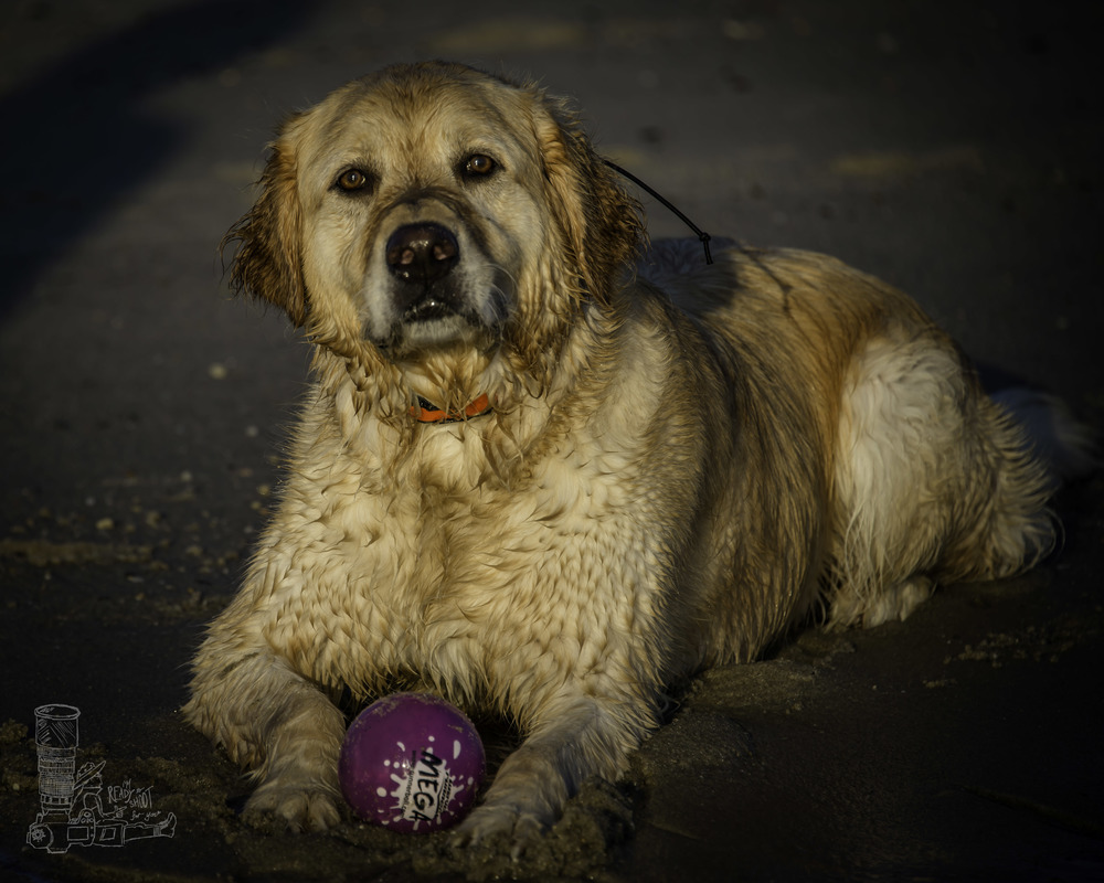 Max and his Ball