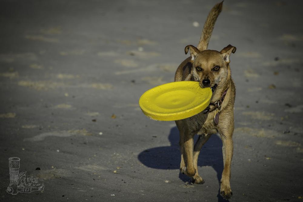 Little Dog Big Toy