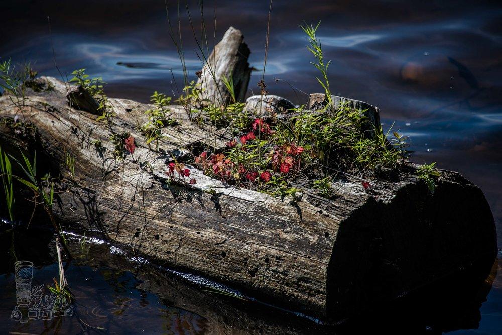 Natures Flower Pot