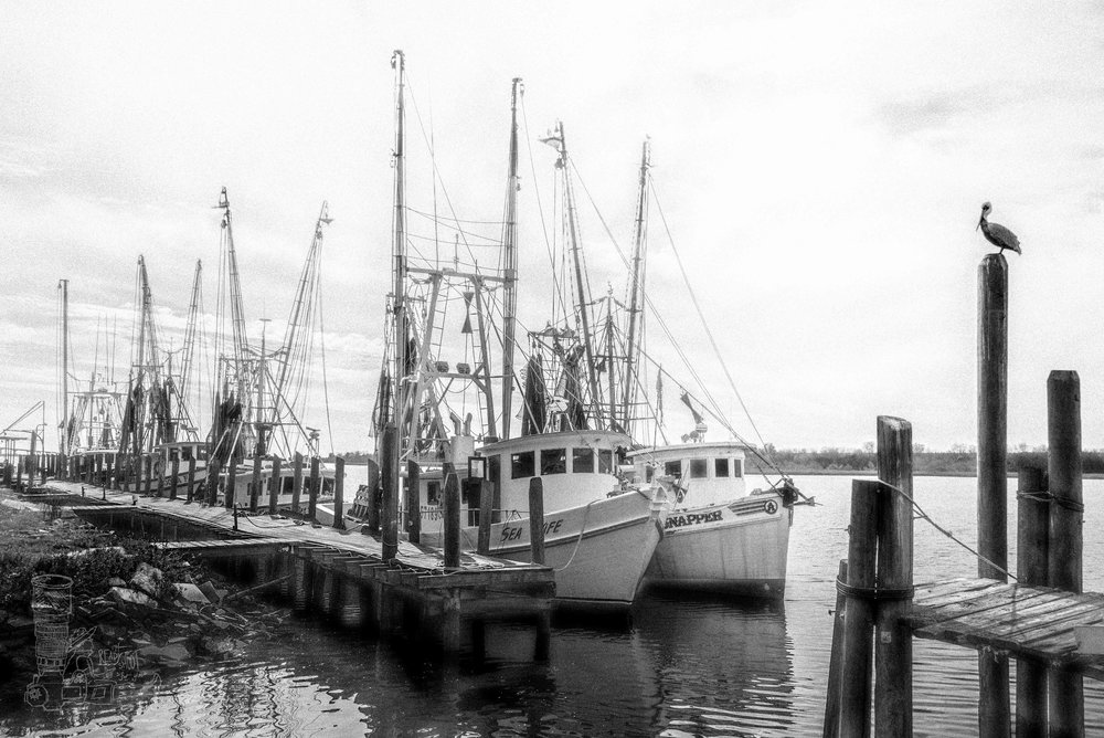 Shrimp Boats of Brunswick