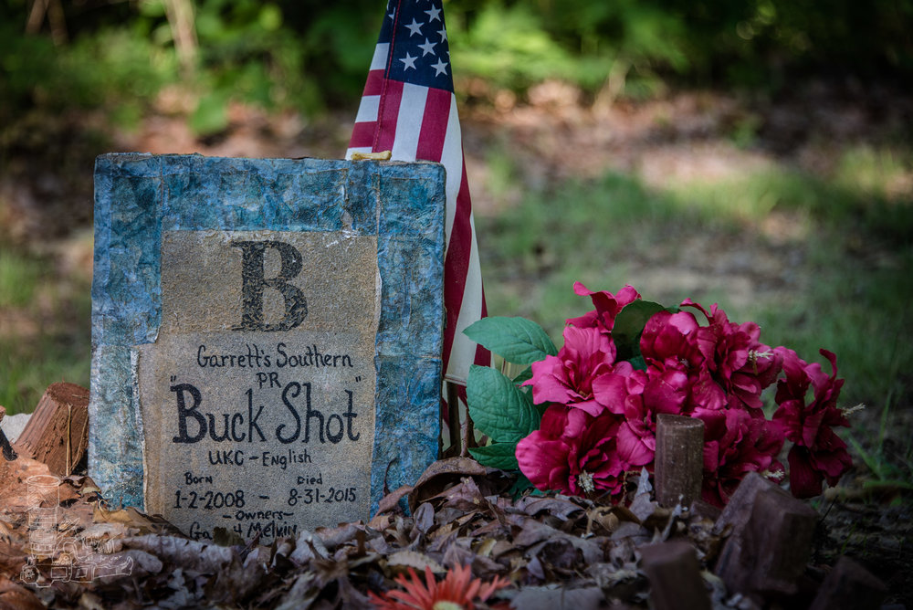 Coon Dog Cemetery 1