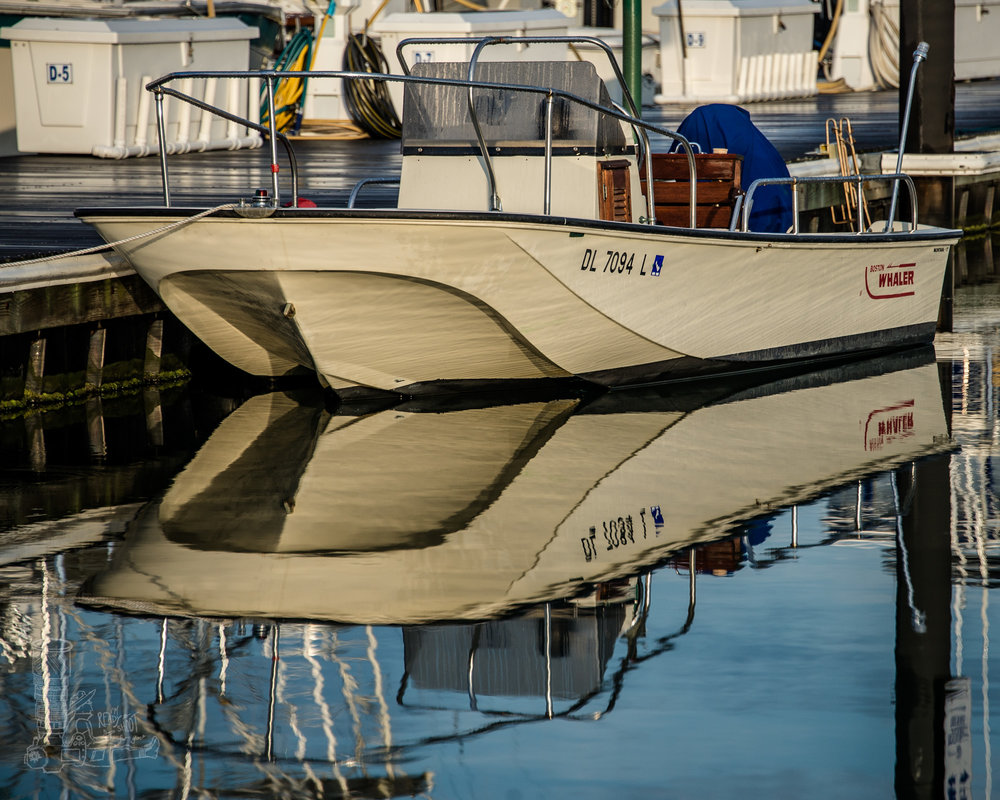 Reflections of a Whaler