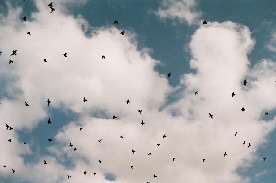 bird storm