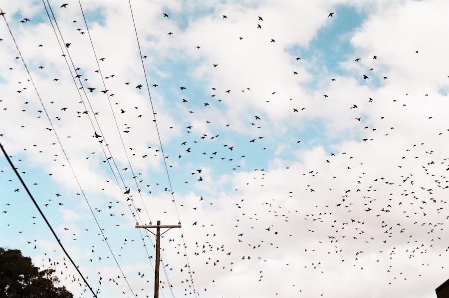 bird storm 2