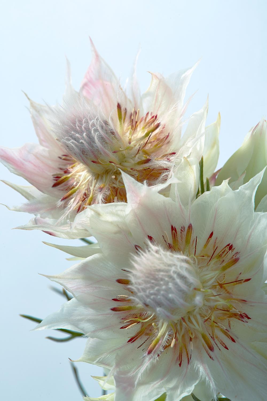 flowers 19b.jpg
