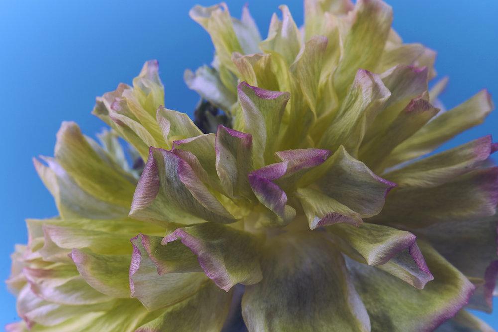 flowersa.jpg