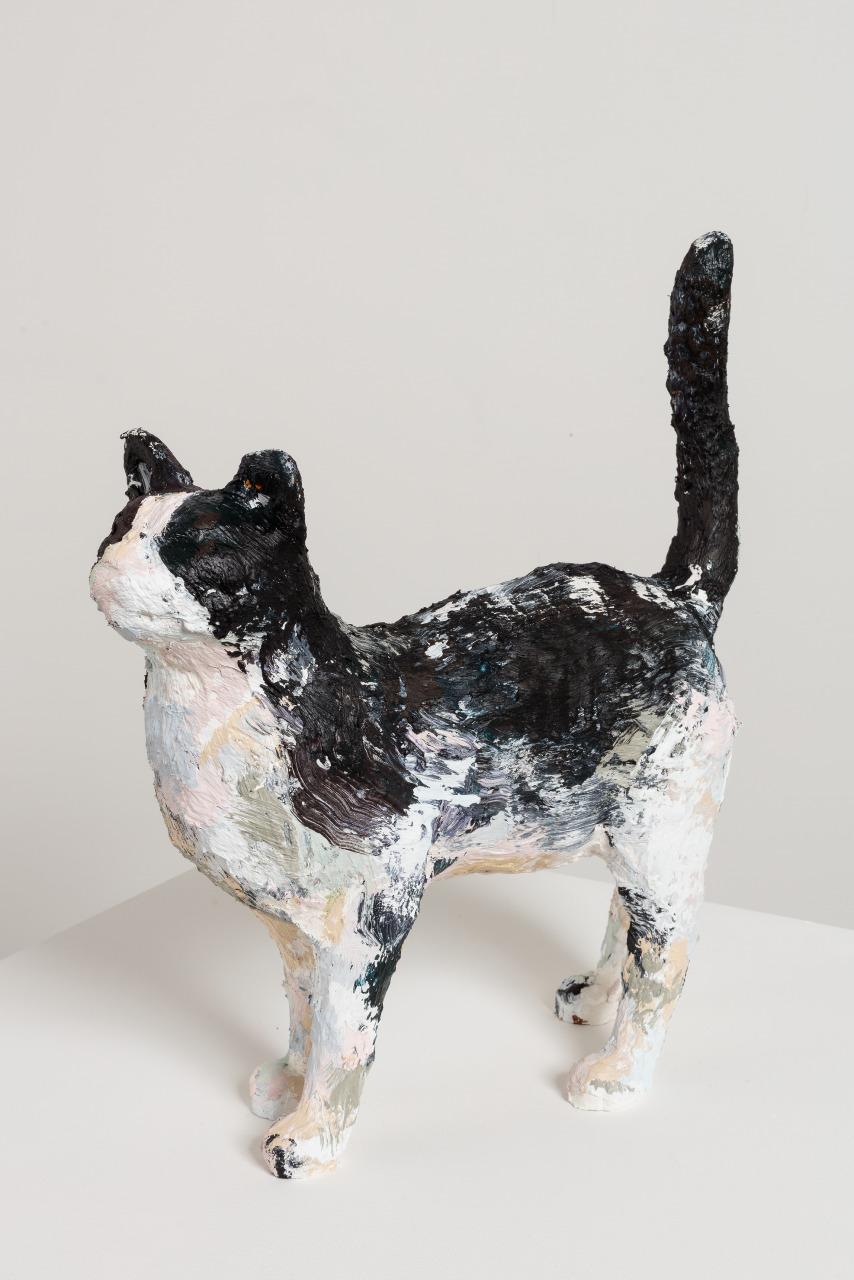 Title TBC (MDC Cat #01)