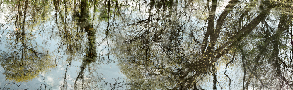 "May Pond, 2015. Giclee print, 36"" x 81"""
