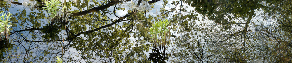 "May 15 Pond, 2013. Giclee print, 36"" x 108"""