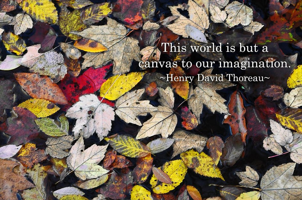 Thanks to Deb Russell for sharing both her image & the matching quote.