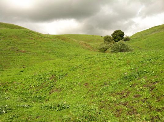 hills_400h.jpg