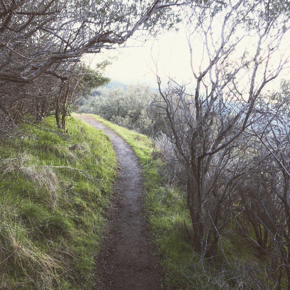 hikingtrail.JPG