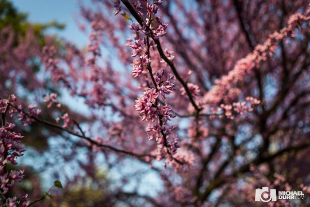 spring089.jpg