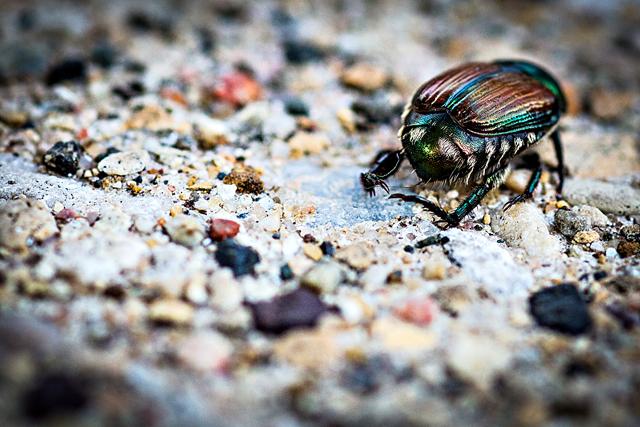 bugs-5.jpg