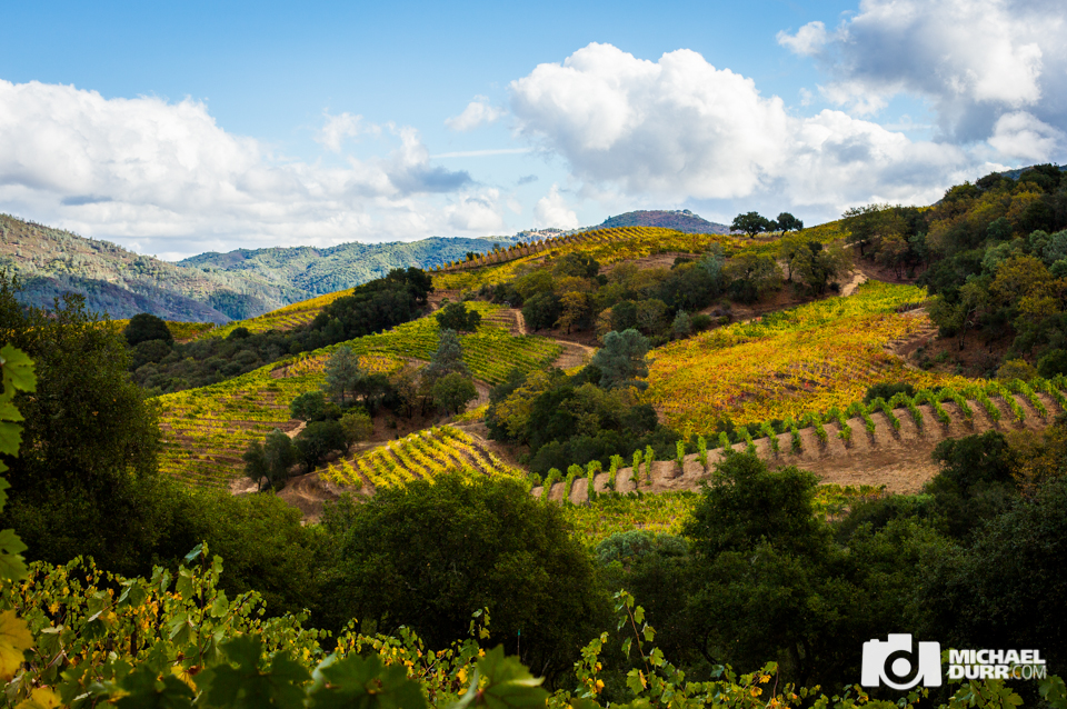 winecountry-334.jpg