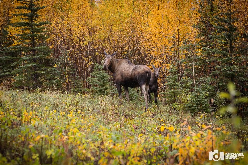 Alaska_MD_0652.jpg