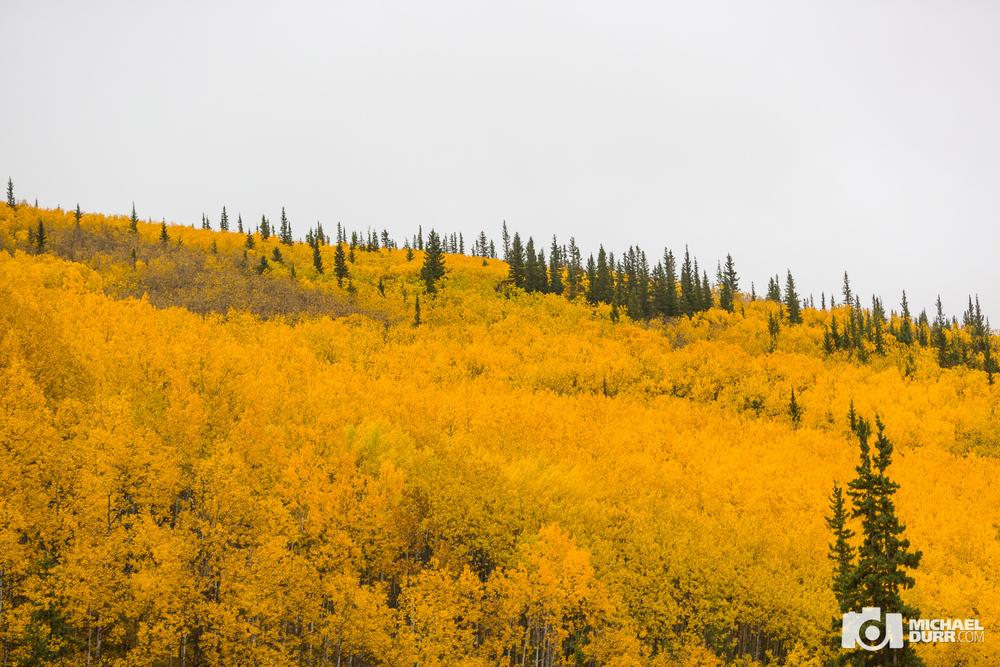 Alaska_MD_0674.jpg
