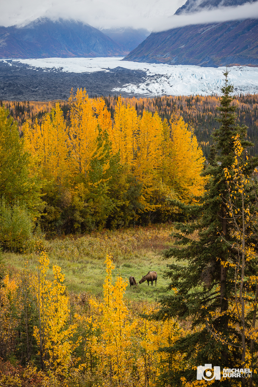 Alaska_MD_1114.jpg